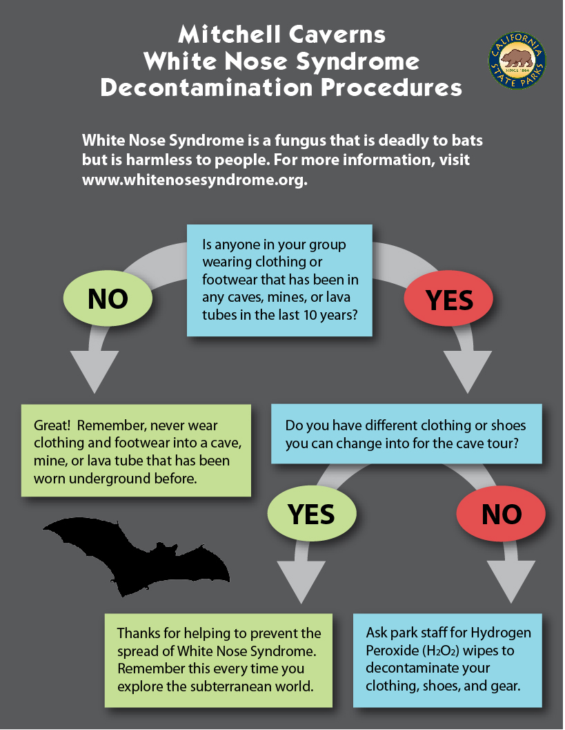 Graphic on the White Noise Syndrome Decontamination Procedures