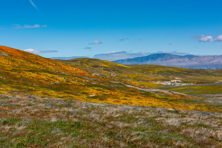 Image from Antelope Valley California Poppy Reserve SNR