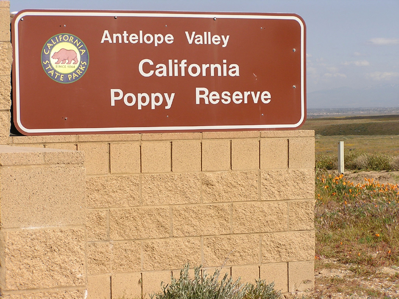 Image from Antelope Valley California Poppy Reserve SNR