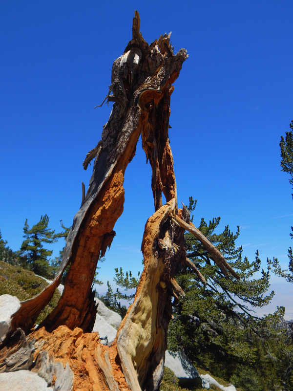 Image from Mount San Jacinto SP