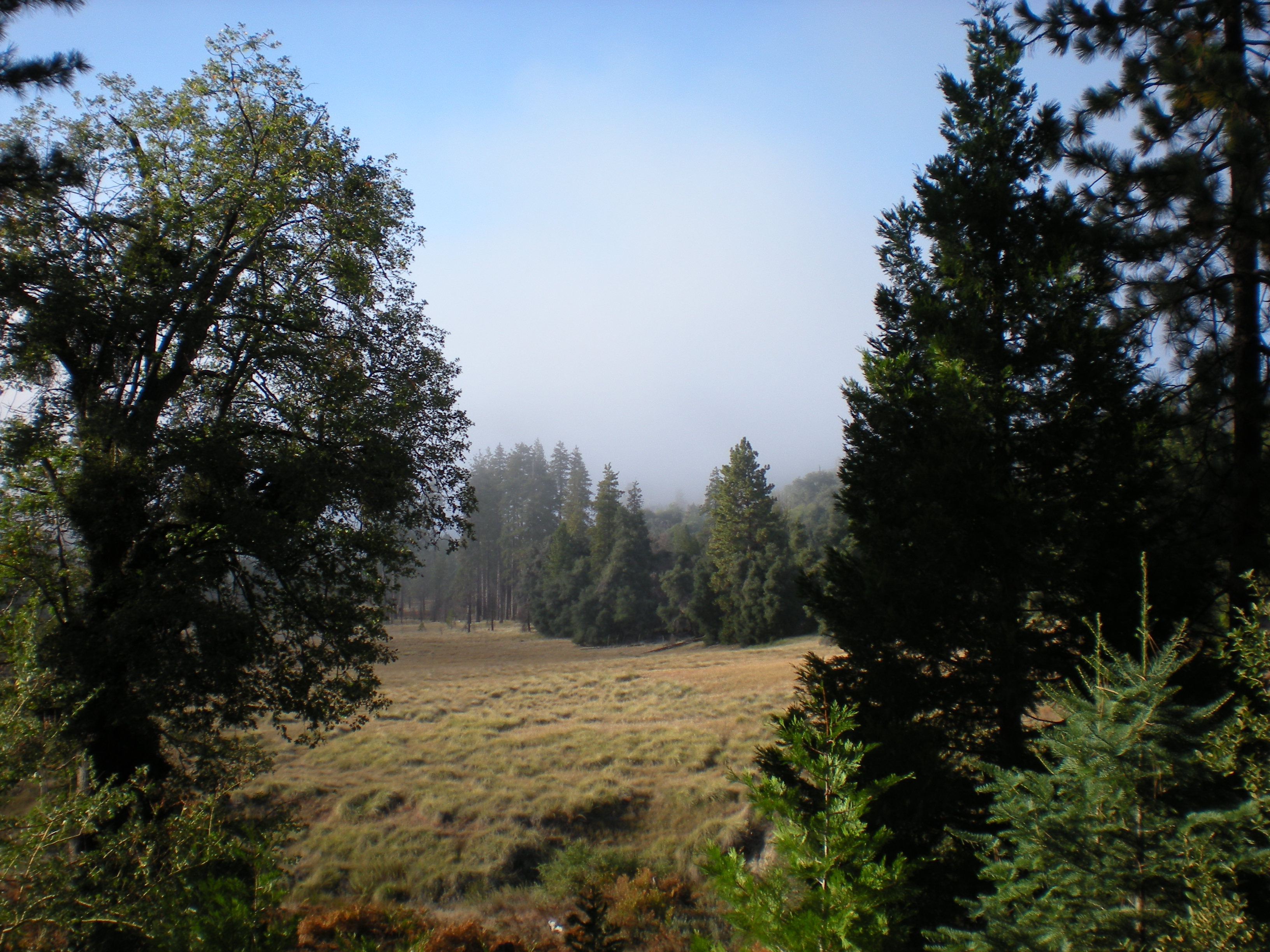 Image from Palomar Mountain SP