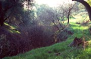 Thumbnail: Photo:  Landscape view of hills and landscape at Chino Hills State Park
