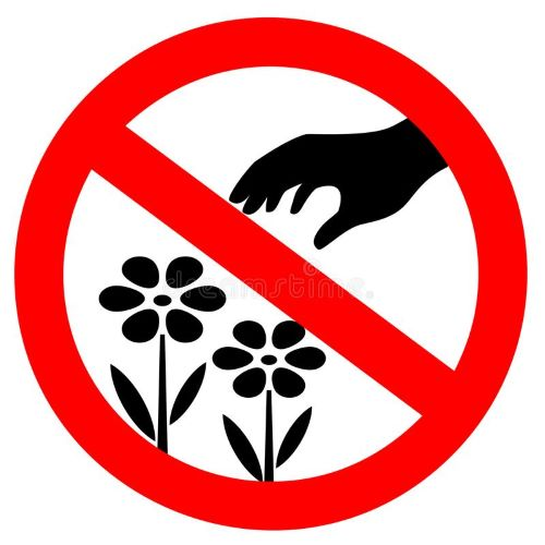 No Wildflower Picking