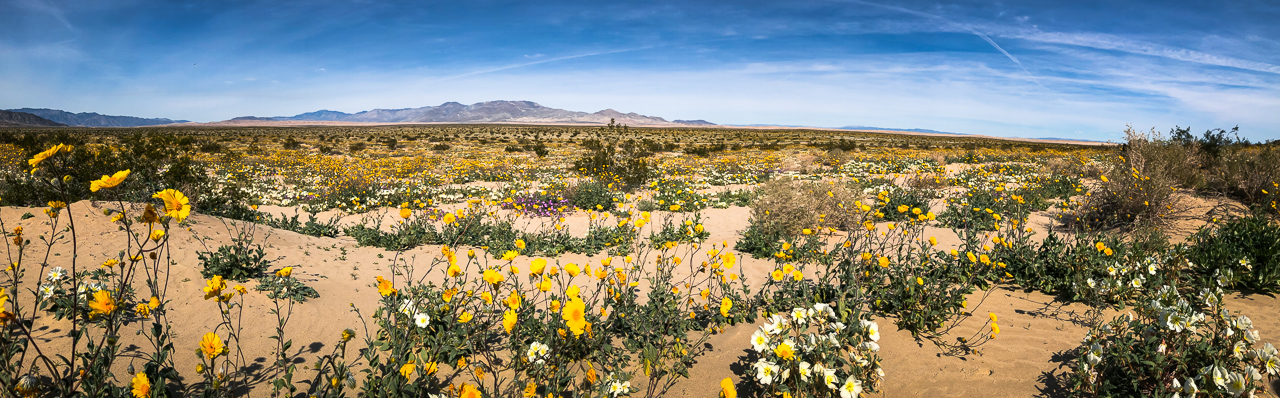 Banner for Wildflower Season May Bring Beautiful Blooms––and Crowds––to State Parks