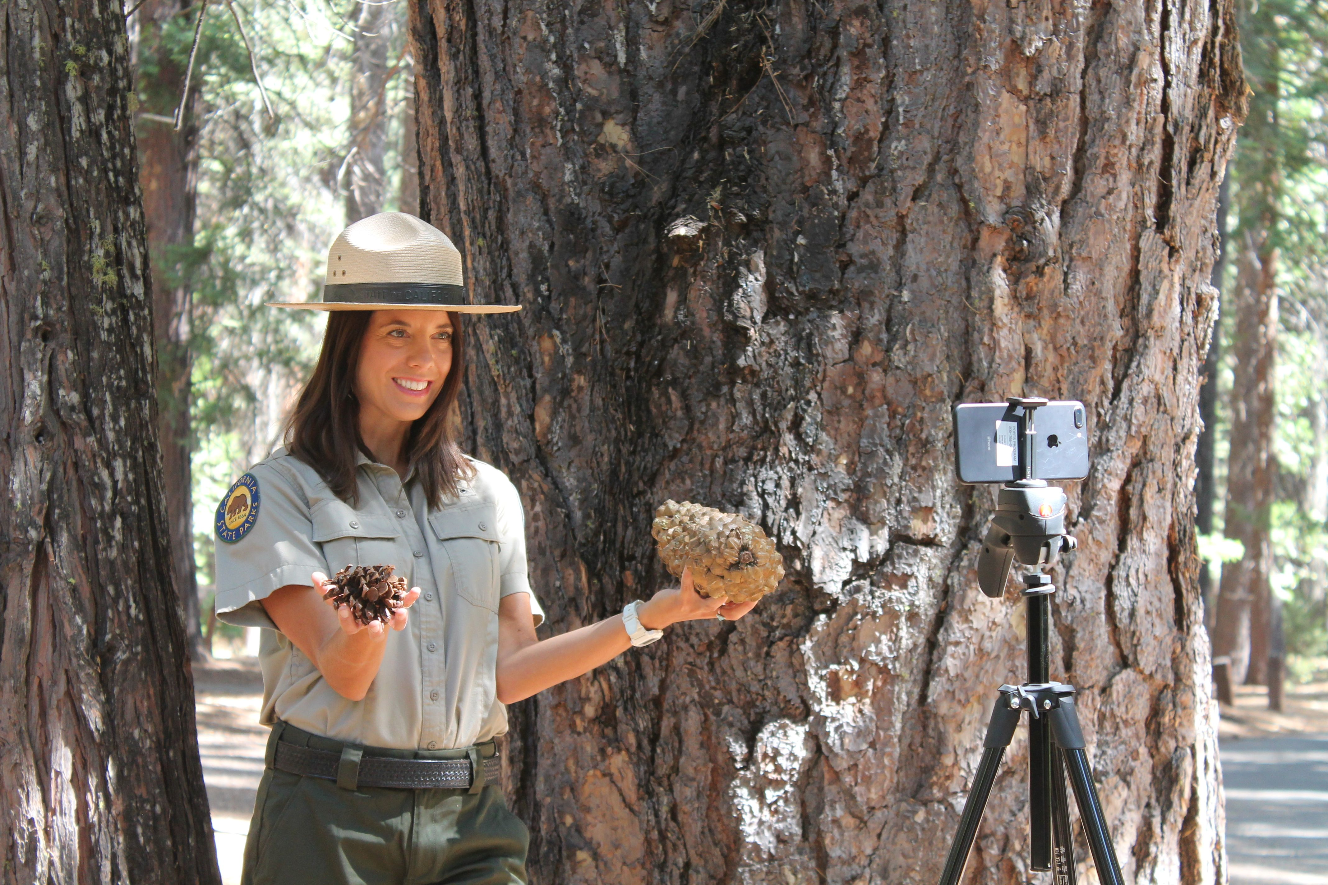 Banner for Save the Redwoods League and California State Parks Launch New Digital Field Trip to Giant Sequoia Forest