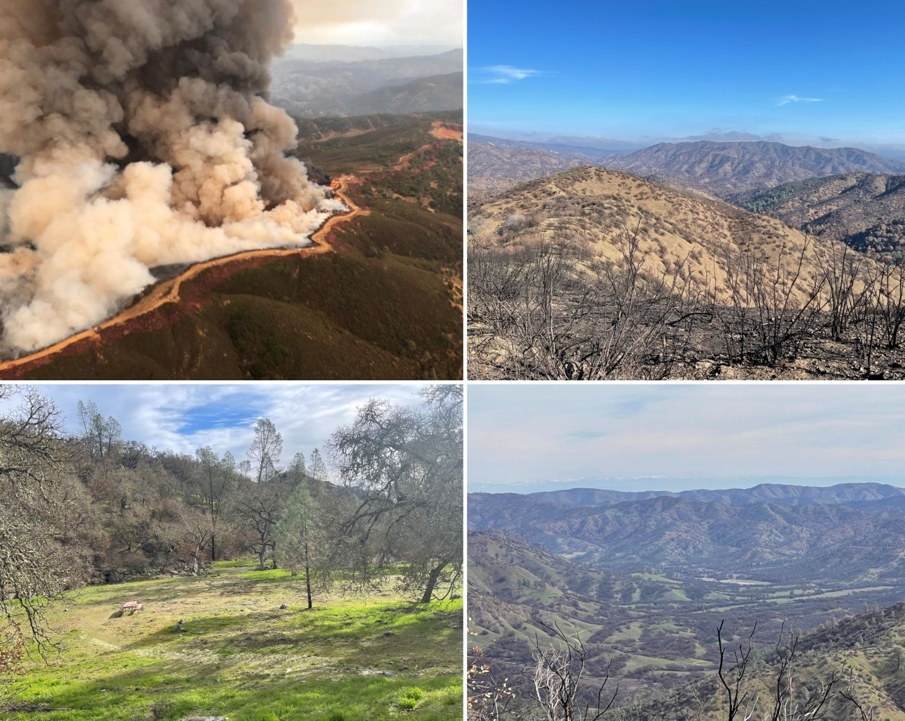 Top left: Control burns set on the west side of a dozer line at Henry W. Coe State Park on August 31, 2020. Photo from CAL FIRE. Top right: Burned area at County Line Road in January 2021. Bottom left: Pacheco Creek Crossing on Feb. 23, 2021. Bottom right: Paradise Flat and Rooster Comb on Feb. 23, 2021. Photos from California State Parks.