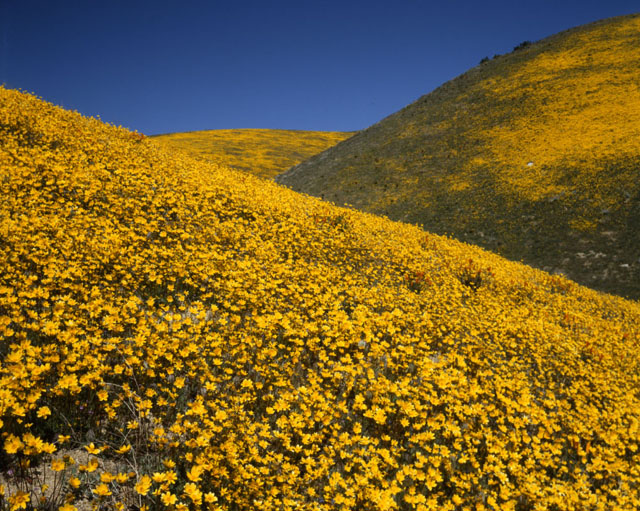 © 1982, California State Parks. Antelope Valley California Poppy Reserve SNR, 090-P55835.