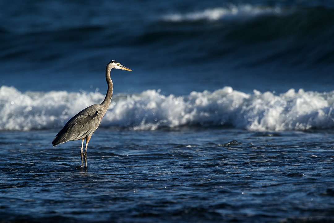 Image from Malibu Lagoon SB